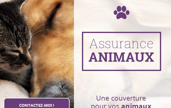 gielis_animaux